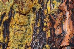 Sörja detaljen för trädskället Arkivfoto