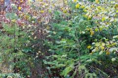 sörja filialen i november höstskog som abstrakt konstverk med b Royaltyfria Foton
