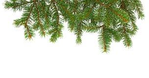 Sörja filialen jul min version för portföljtreevektor tät grantree för filial upp arkivbild