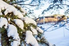 Sörja filialen med snö på en solig dag Royaltyfria Foton