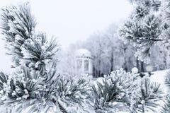 Sörja filialer med visare som täckas av frost och gazeboen Arkivfoton