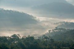 Sörja Forest Autumn Fall Landscape Foggy Morning, strålar sörjer in skogen Arkivfoton