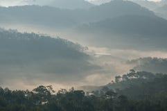 Sörja Forest Autumn Fall Landscape Foggy Morning, strålar sörjer in skogen Royaltyfria Bilder