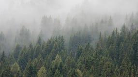 Sörja Forest With Pure Morning Mist arkivbilder