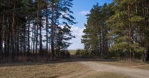 Sörja Forest Road Arkivfoto