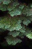 Sörja Forest Trees i vildmark och berg Royaltyfria Bilder