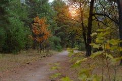 Sörja höstskogen Arkivbild