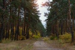 Sörja höstskogen Royaltyfria Bilder