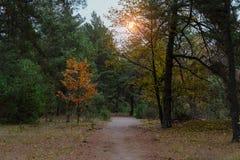 Sörja höstskogen Arkivfoto