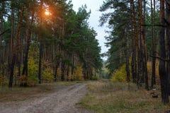 Sörja höstskogen Royaltyfri Bild