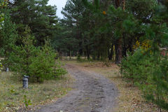 Sörja höstskogen Royaltyfri Fotografi