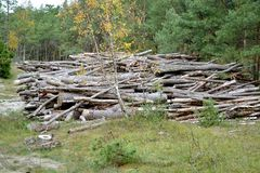 Sörja journaler ligger i massa i det barrträds- trät loggad arkivbild