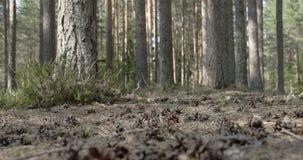 Sörja kottar spridda på jordningen av skogen