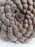 Sörja kottemodellen naturlig textur Royaltyfria Bilder