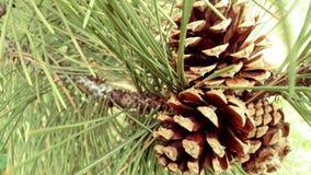 Sörja kottenärbilden i träd Fotografering för Bildbyråer
