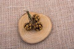 Sörja kotten på ett stycke av klippt trä Royaltyfria Bilder