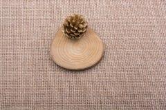 Sörja kotten på ett stycke av klippt trä Royaltyfri Fotografi