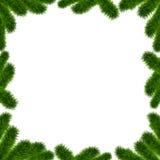 Sörja lemmar och trä Royaltyfri Foto
