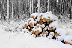 Sörja loggar in skogen på vintertid Arkivfoton