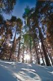 Sörja Long trees Fotografering för Bildbyråer