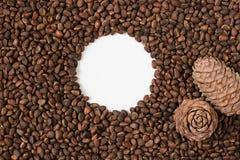 Sörja muttern, kärna ur, cederträ, brunt som är naturlig, mat, rundan, vit, kotte royaltyfria bilder
