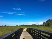 Sörja naturligt område för gläntor i Florida träsk Arkivbild