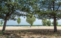 Sörja och lövfällande träd som framme växer av floden, sand royaltyfria foton