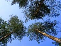 Sörja på bakgrunden för blå himmel Royaltyfri Foto