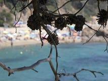 Sörja på en klippa som visar dess frukt som är ananas arkivfoto