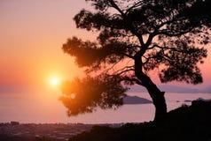 Sörja på kusten av havet på solnedgången Royaltyfria Bilder