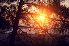 Sörja på kusten av havet på solnedgången Arkivfoto