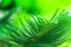 Sörja sidor i trädgården för den gröna bakgrunden Fotografering för Bildbyråer