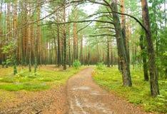 Sörja skogen Royaltyfri Foto