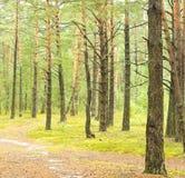 Sörja skogen Royaltyfria Bilder