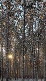 Sörja skogen Royaltyfri Fotografi