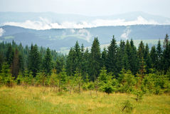 Sörja skogen i de Carpathian bergen Royaltyfri Foto