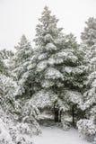 Sörja skogen under snow royaltyfri fotografi