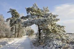 sörja snow Royaltyfria Bilder