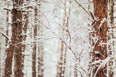 sörja snowtrees Arkivfoton