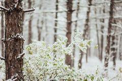 sörja snowtrees Arkivbilder