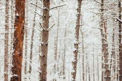 sörja snowtrees Arkivfoto