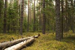 Sörja sommarskogen med det fallande trädet och mossa arkivbilder