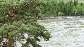 Sörja ställningar på banken av en bergflod stock video