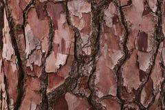 Sörja textur för trädskället, och bakgrund, slut upp sikt av naturligt och organiskt sörjer skällmodellen arkivfoto