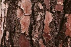 Sörja textur för trädskället, och bakgrund, slut upp sikt av naturligt och organiskt sörjer skällmodellen arkivbild
