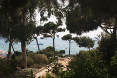 Sörja tjockt träd ger skugga och bak dem havet Royaltyfria Bilder