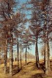 sörja trä Arkivbild