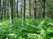 sörja trä Arkivbilder