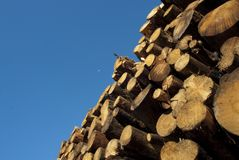 Sörja trä som samlas efter branden, Guadalajara, Spanien arkivbild