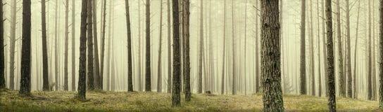Sörja träd Royaltyfri Fotografi